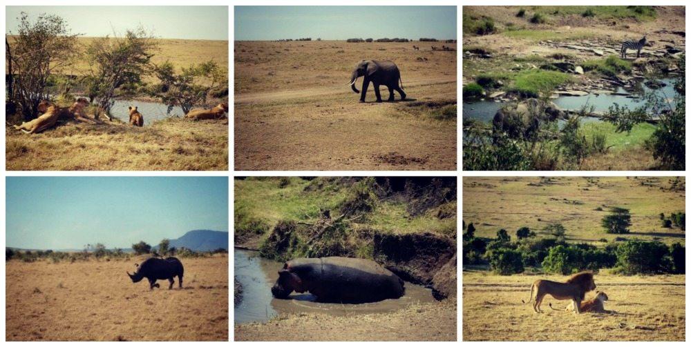 Safari March 2015